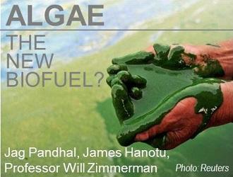 Algae - The Next Biofuel - China Water Risk