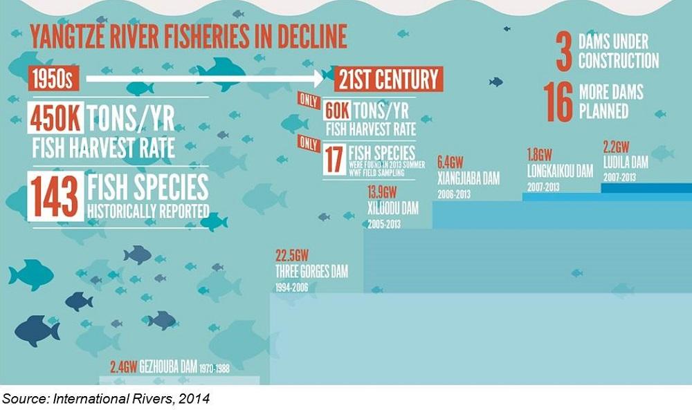 Yangtze River Fisheries in Decline